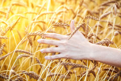 Żeńscy ręka dotyki banatka Zdjęcia Royalty Free