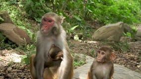 Żeńska małpa bierze jedzenie zbiory wideo