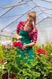 Żeńska ogrodniczka w targowym ogródzie lub pepinierze Zdjęcie Stock
