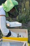 Żeńska pszczelarka sprawdza ul zapewniać zdrowie pszczoła zdjęcie royalty free