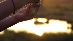 Żeńska ręka gniesie śmietankę na innej ręce przy zmierzchem zdjęcie wideo