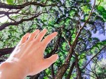 Żeńska ręka rozciąga do drzew, Żywa, naturalna fotografia, obraz royalty free