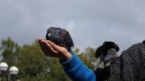 Żeńska ręka utrzymuje gołąbki na słonecznym dniu w jesieni w mo zbiory wideo