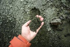 Żeńska ręki mienia kępa, powulkaniczny pył w górach lód Obrazy Stock