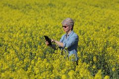 Żeński agronom egzamininuje kwitnący rapeseed pole Obrazy Stock