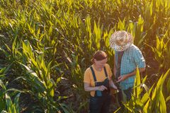 Żeński agronom radzi kukurydzanego rolnika w uprawy polu obrazy royalty free