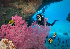 Żeński akwalungu nurek w oceanie indyjskim, Maldives fotografia stock
