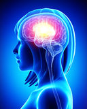 Żeński mózg Obrazy Royalty Free