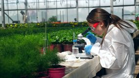 Żeński naukowiec pracuje z mikroskopem podczas rośliny badania zbiory wideo