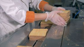 Żeński pracownik stawia świeżych ciastko gofry na konwejerze zbiory