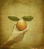 żeński ręki pomarańcze rocznik Obrazy Royalty Free
