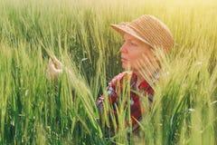 Żeński rolnik egzamininuje pszenicznych ucho w polu Obraz Stock