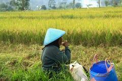 Żeński rolnik Indonezja obraz royalty free