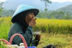 Żeński rolnik Indonezja zdjęcia royalty free