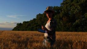 Żeński rolnik w w kratkę koszula chodzi pszenicznych pola z pastylką i sprawdza ilość uprawa zbiory