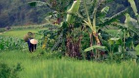 Żeński rolnik Zbiera uprawy w Wietnam Fotografia Royalty Free