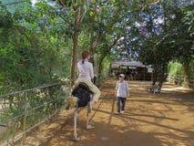 Żeński turysta jedzie strusia w Prenn parku fotografia royalty free