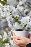 Żeńskie ręki trzymają białą porcelany filiżankę z kwiatonośną wiśnią tr zdjęcie stock