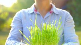 Żeńskie ręki trzymają out garść ziemia z zieloną trawą Pojęcie przyrost, opieka, trwałość, ochrania ziemię zdjęcie wideo