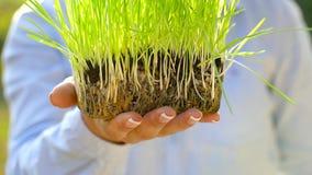 Żeńskie ręki trzymają out garść ziemia z zieloną trawą Pojęcie przyrost, opieka, trwałość, ochrania ziemię zbiory wideo