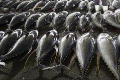 Żebro żółty tuńczyk Zdjęcia Royalty Free