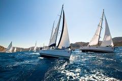Żeglowania regatta zdjęcie royalty free