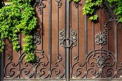 Żelazo fałszująca brama z rdzy zieleni obfitolistną rośliną zdjęcia stock