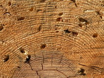 żlobi drzewnego bagażnika zdjęcie royalty free