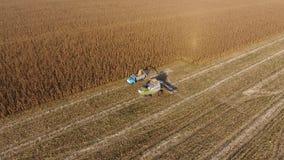 Żniwiarz zbiera kukurudzy Zbiera kukurydzanych cobs z pomocą syndykata żniwiarza Dojrzała kukurudza na polu zbiory