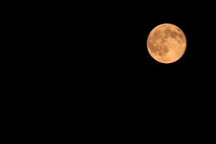 żniwo księżyc Obraz Stock