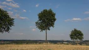 Żniwo zbiera pole jest odpoczynkowym polem, drzewa, niebo, chmury, evening zdjęcie wideo