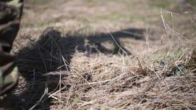 Żołnierz w wojennym harcerzu stawia hełma i kamuflażu sieć tworzyć kamuflaż z suchą trawą w lesie zdjęcie wideo