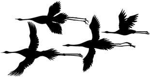 żurawie japońscy Zdjęcia Stock