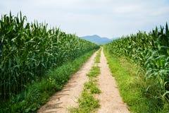 Żwir droga między polami zdjęcie royalty free