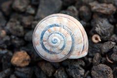 żwiru Lanzarote mały ślimaczek powulkaniczny Obraz Royalty Free