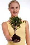 życia drzewo Zdjęcie Stock