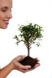 życia drzewo Obrazy Stock