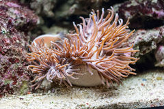 życia underwater Obrazy Stock