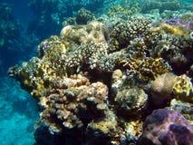 życia underwater Obraz Royalty Free