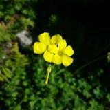 Życie jest ubranym kolor żółtego Zdjęcia Royalty Free