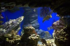 życie pod wodą Fotografia Stock