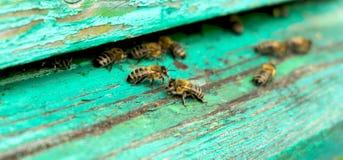 Życie pracownik pszczoły Kolekcja miód Obraz Stock