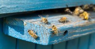 Życie pracownik pszczoły Kolekcja miód Obrazy Royalty Free
