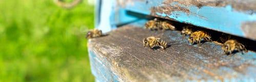 Życie pracownik pszczoły Pszczoły przynoszą miód Zdjęcia Royalty Free