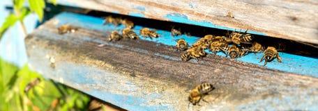 Życie pracownik pszczoły Pszczoły przynoszą miód Zdjęcia Stock