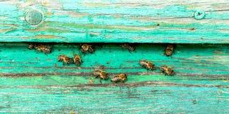 Życie pszczoły Pracownik pszczoły Pszczoły przynoszą miód Obrazy Royalty Free