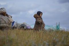 Życie reniferowi poganiacze bydła na Yamal półwysepie obraz stock