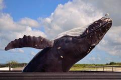 Życie sortował realistycznego skokowego baleen Humpback wieloryba figura z foką na głowie przy Ecomare dennego zwierzęcia sanktua zdjęcia stock