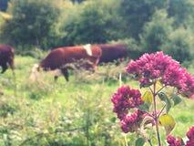 Życie w Pełnym kwiacie fotografia royalty free