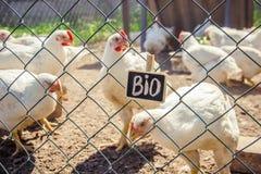 Życiorys kurczaki na domu gospodarstwie rolnym obraz royalty free